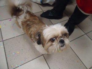 Figaro, le copain de Crapule le chien de Mario